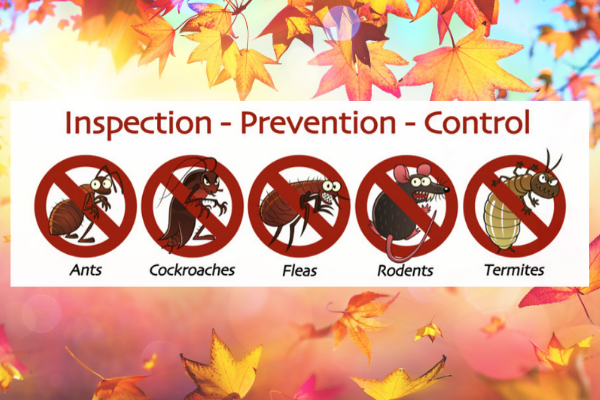 Secure Your Home From Pests And Critters